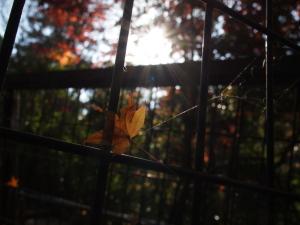 暇つぶしに枯葉を…