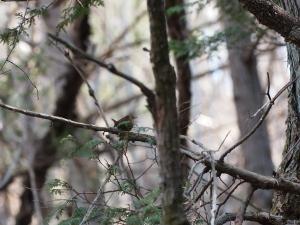 暗い林内で…