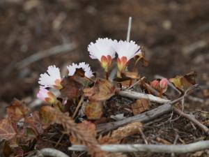 白っぽいお花…