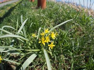 黄色いお花…