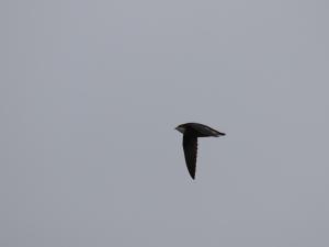 翼上面の青みが何とか…