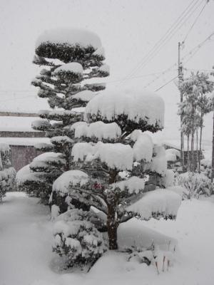 山茶花のお花にも雪が…