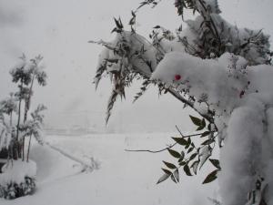 大雪でした…