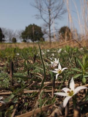 春のお花~…