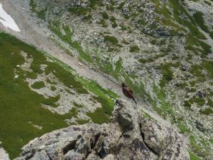 岩の上で…